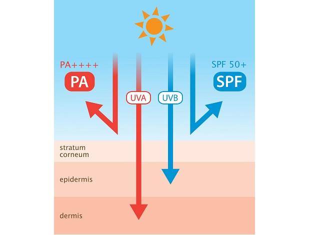 SPFとPメカニズム